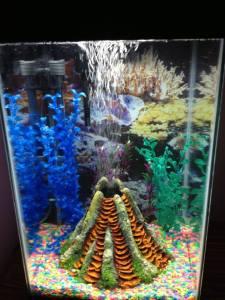 aquariumb4fish